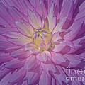 Fantasy In Pink by Ann Horn