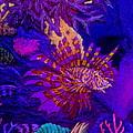 Fantasy Lionfish by Hank  Bufkin