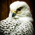 Fantasy White Falcon by Steve McKinzie