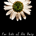 Far Side Of The Daisy Fractal Version by Weston Westmoreland