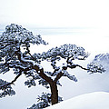 Fare-well Pine Tree by King Wu