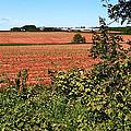 Farm Along Confederation Trail-pei by Ruth Hager