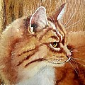 Farm Cat On Rustic Wood by Debbie LaFrance