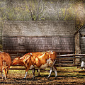 Farm - Cow - A Couple Of Cows by Mike Savad