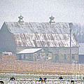 Farm Fed by Skip Willits
