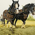 Farm Horses by David Nockels