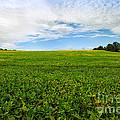 Farm Land  by Mary  Smyth