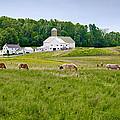 Farm Life by Guy Whiteley