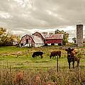 Farm Living by Karen Varnas
