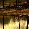 Farm Pond Reflections by Maria Urso
