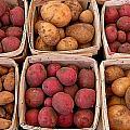 Farm Potatoes by Cynthia Wallentine