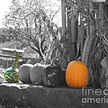 Farm Stand In Autumn by Smilin Eyes  Treasures
