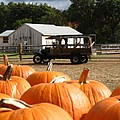 Farm Stand Pumpkins by Barbara McDevitt