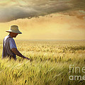 Farmer Checking His Crop Of Wheat  by Sandra Cunningham