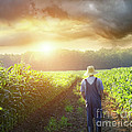 Farmer Walking In Corn Fields At Sunset by Sandra Cunningham
