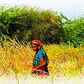 Farmers Fields Harvest India Rajasthan 2a by Sue Jacobi