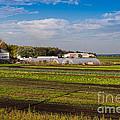 Farmer's Market And Green Fields by Les Palenik