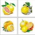 Farmers Market Gifts Vitamin C by Irina Sztukowski