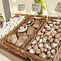 Farmers Market Mushrooms by Sophie McAulay