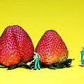 Farmers Working Around Strawberries by Paul Ge