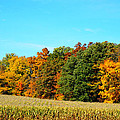 Farmfield Fall by Dan Sproul