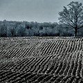 Farmfield Furrows by Henry Kowalski