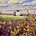 Farmhouse And Grapevines by Jill Battaglia