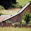 Farming by Kathy Sampson