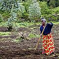 Farmlady by Paul Weaver