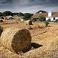 Farmland by Carlos Caetano