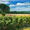 Farmland by Claudia Kuhn