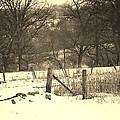 Farmland by Dan Young