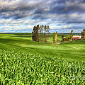 Farmstead by Beve Brown-Clark Photography