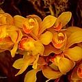 Fascinating Beauty by Sonali Gangane