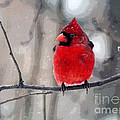 Fat Cardinal In The Snow by Catherine Sherman