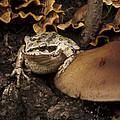 Fat Frog by Jean Noren