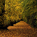 Fathers Day Avenue Of Leaves by Sarah Broadmeadow-Thomas