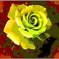 Fauvism Roses Triptych by Barbara Griffin