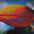Fauvist Hydrangea Leaf by Beth Akerman