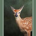 Fawn Baby Deer Wildlife Christmas Cards by Jai Johnson