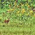 Fawn In Flowers by Shirley Tinkham