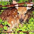 Fawn In The Forest - Inspirational - Religious by James Scott Preston
