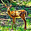 Fawn In The Woods by Alice Gipson