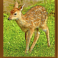 Fawn Poster Image by A Gurmankin