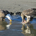 Feasting Pair by Frank Townsley