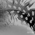 Feather 2 by Sally Simon