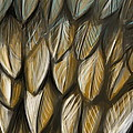 Feather 4 by Naomi McQuade