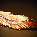 Feather by Anne Costello