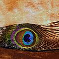 Feather Design by Candy Frangella