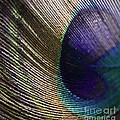 Feather Fan by Andrea Goodrich